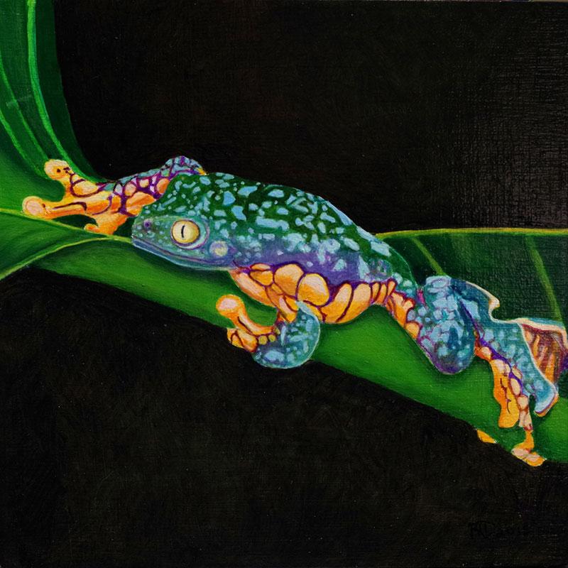 Fringe Toad Tree Frog by Bob 'Omar' Tunnoch