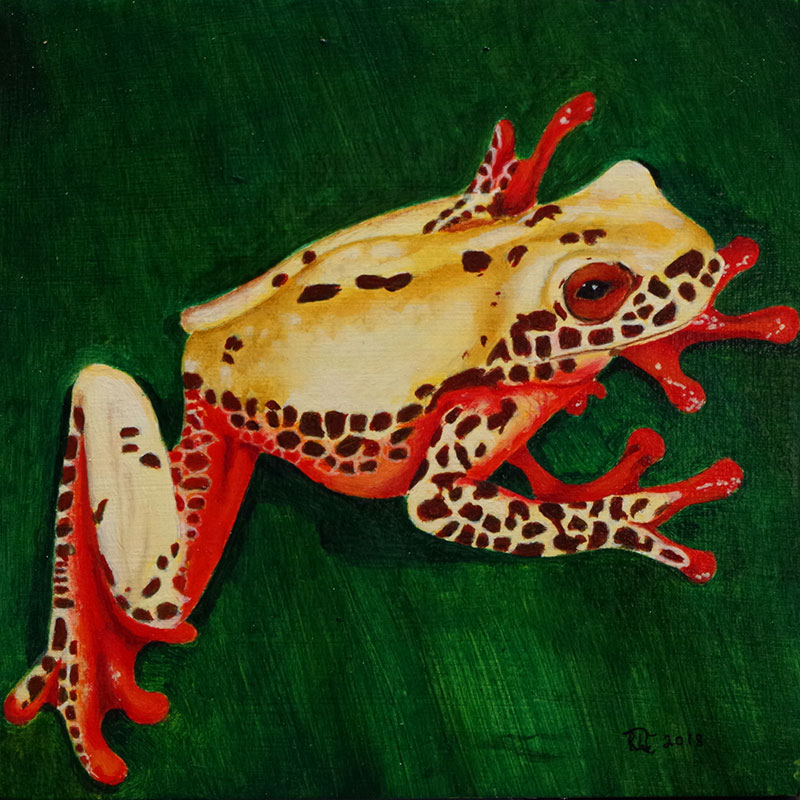 Clown Tree Frog 3 by Bob 'Omar' Tunnoch