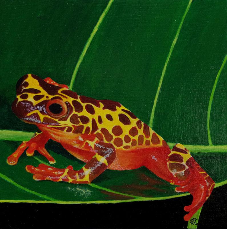 Clown Tree Frog 2 by Bob 'Omar' Tunnoch