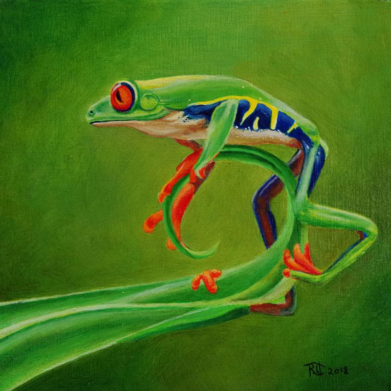Red Eyed Tree Frog by Bob 'Omar' Tunnoch