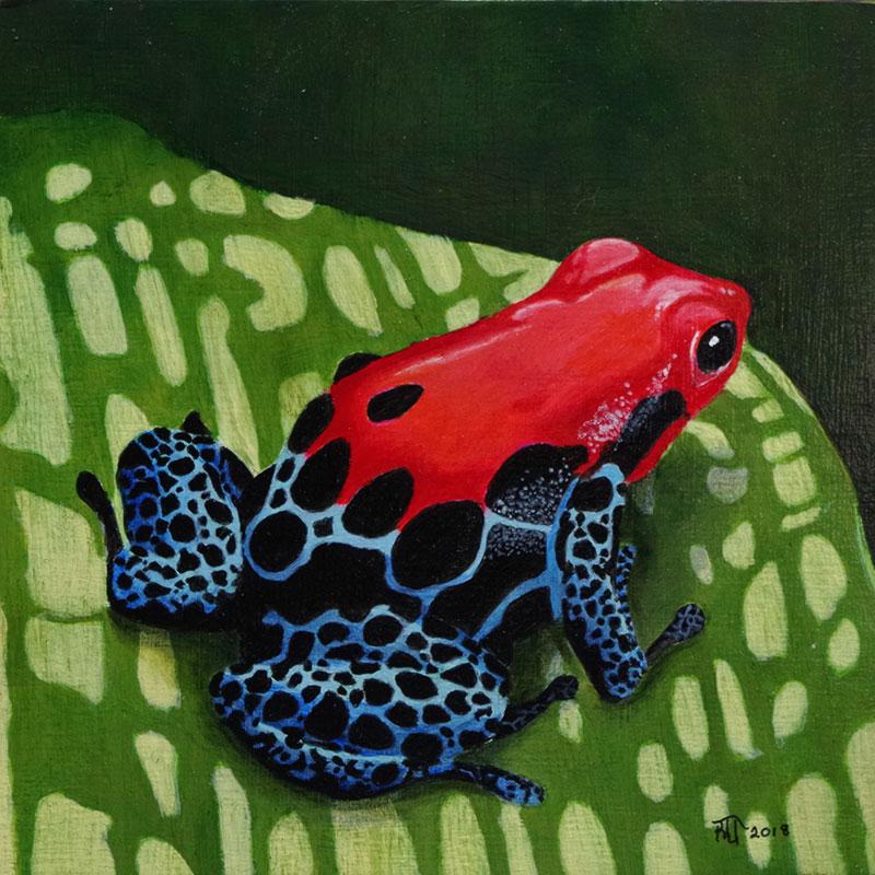 Poison Arrow Frog 3 by Bob 'Omar' Tunnoch