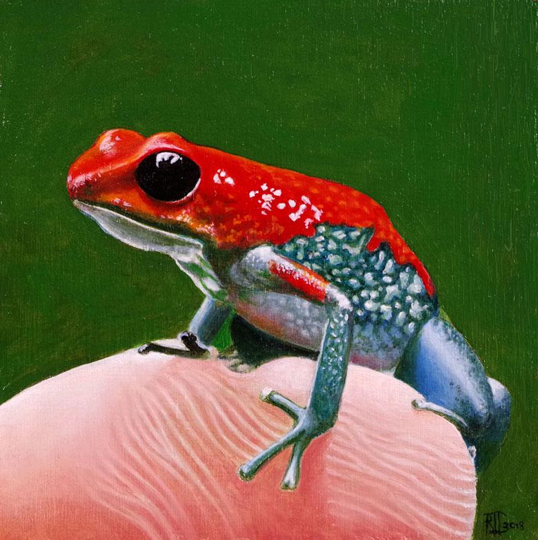 Poison Arrow Frog 2 by Bob 'Omar' Tunnoch