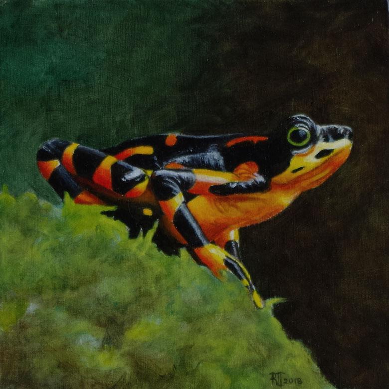 Harlequin Frog by Bob 'Omar' Tunnoch