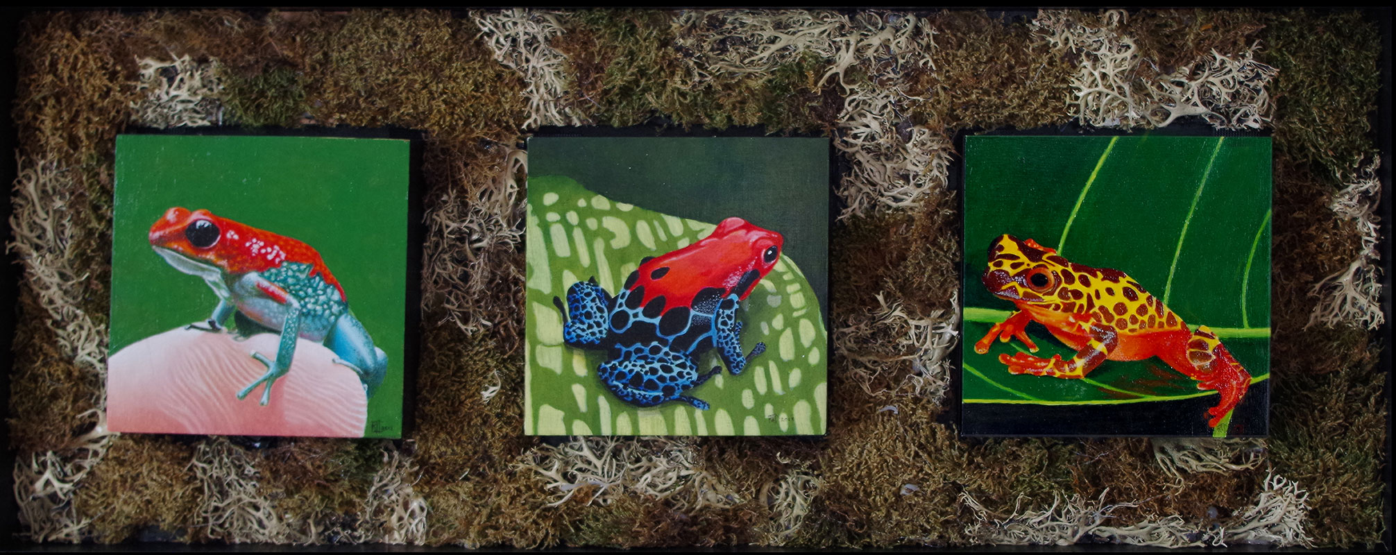 The Sopranos #3 Poison arrow frog, Poison arrow frog ,Clown tree frog by Bob 'Omar' Tunnoch